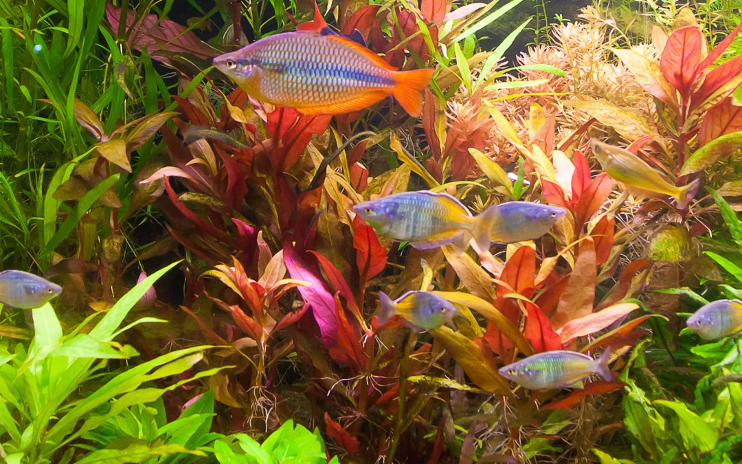 How Aquarium Hobbyists Can Make a Difference in the Sustainability of Aquatic Ecosystems
